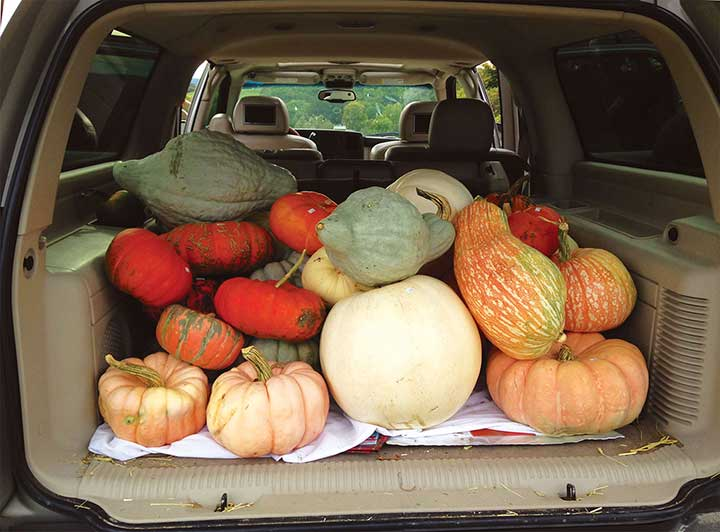 Happy customer with load of pumpkins